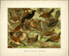 Grafický list - Ptáci 19 - volný list