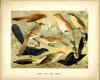 Grafický list - Ptáci 25 - volný list
